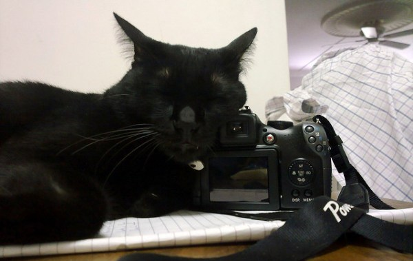 fotografia-gatos