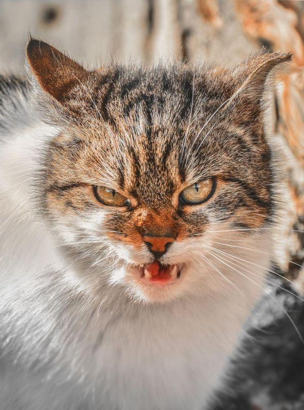 gatos rua fotografia gabriel khiterer (10)