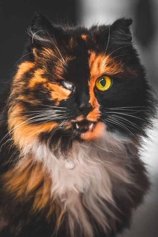 gatos rua fotografia gabriel khiterer (2)