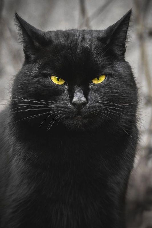 gatos rua fotografia gabriel khiterer (4)