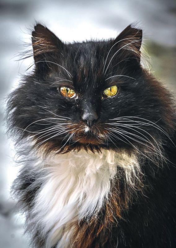 gatos rua fotografia gabriel khiterer (5)