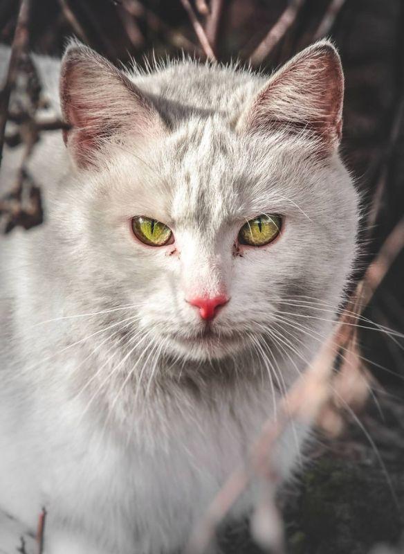 gatos rua fotografia gabriel khiterer (7)