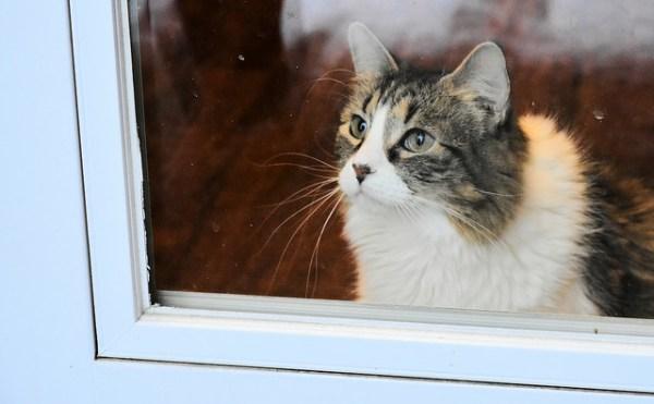lar temporario cuidados animal
