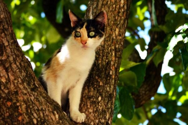 gato-domestico-gato-feral