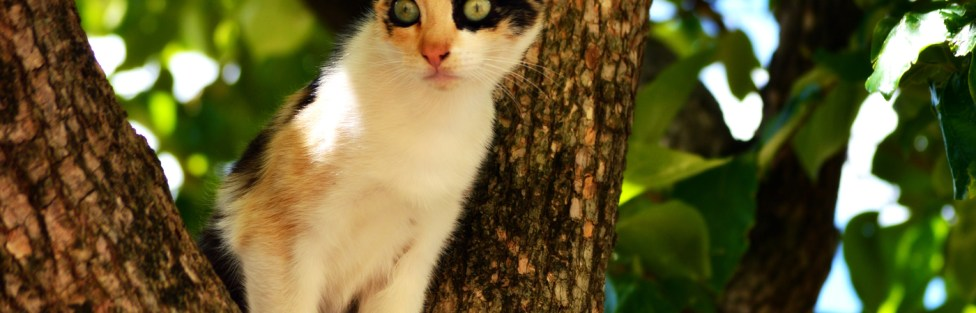Gato doméstico ou gato feral: você sabe a diferença?