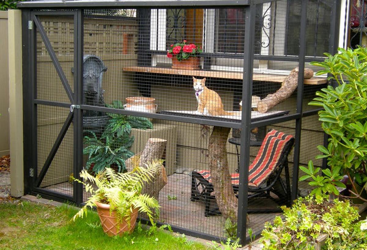 Catios: a nova tendência pela segurança e bem-estar dos gatinhos
