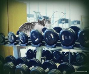 GA_workout