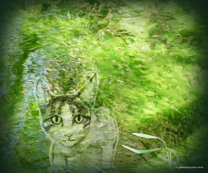 GA_underwater gato