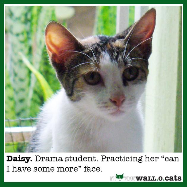 GA_WOC Daisy