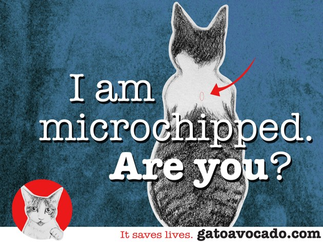 GA_microchipped. new size2