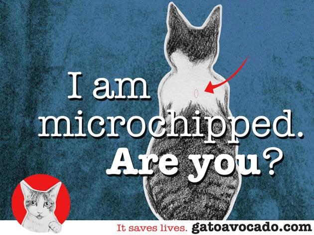 GA_microchipped. new size2