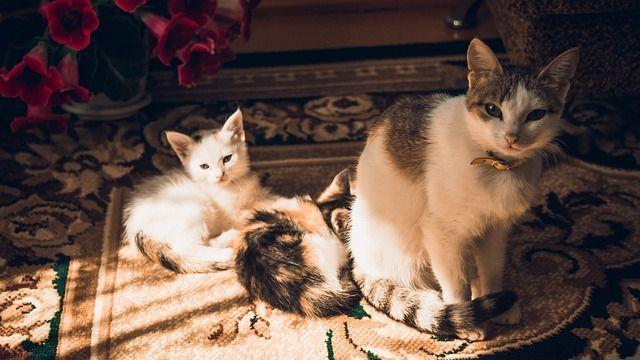 cat-366930_640