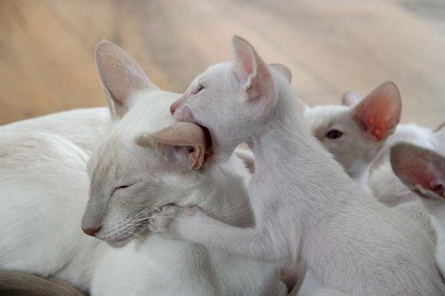kitten-408853_640