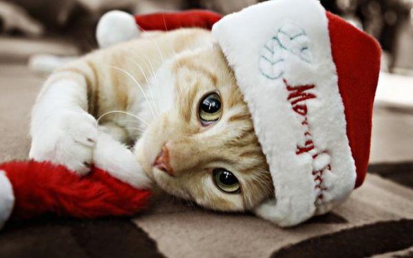 gatos-navidad-2