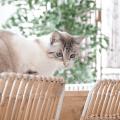 Macarena Gea Busca a su Gato Miso