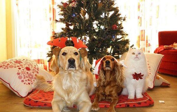 Cómo Mejorar la Convivencia entre Perros y Gatos