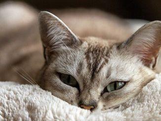 Beneficios Psicológicos de Cuidar de Un Gato