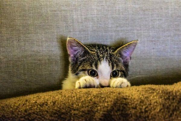 Clínica Veterinaria Busca Abrazadores de Gatos