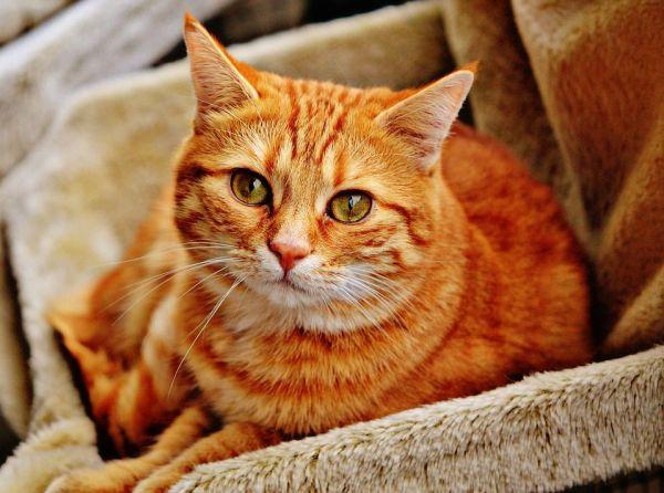 Cómo Superar el Miedo a los Gatos