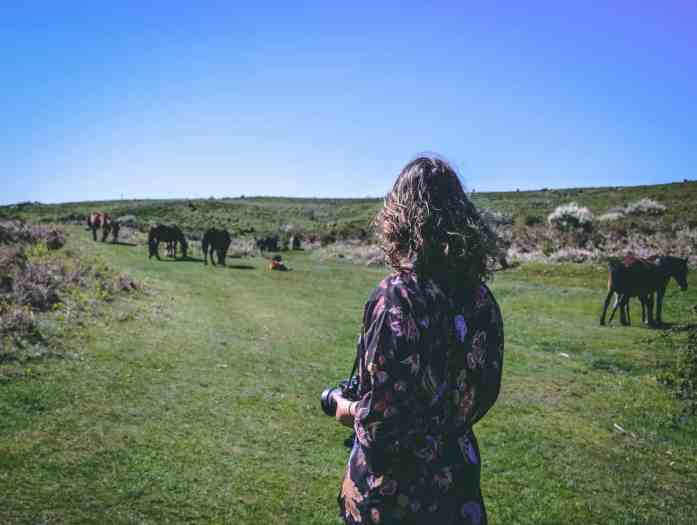 Observação de cavalos selvagens