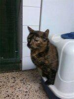 ¿por qué mi gato hace pis fuera de la cubeta?
