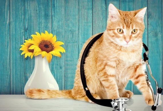 ¿Por qué tu gato tiene miedo al veterinario?