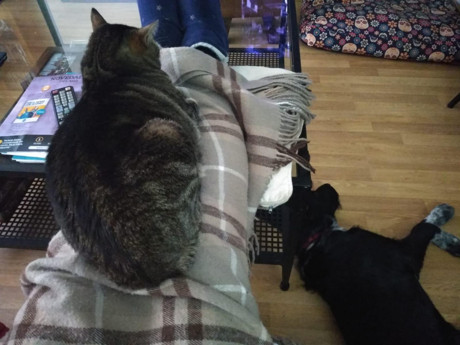 Morgana y Luca