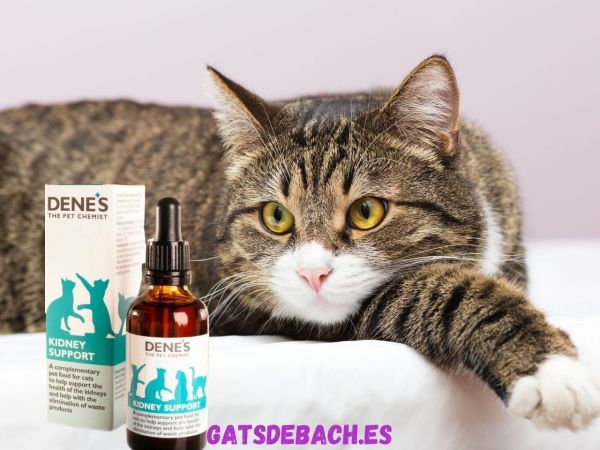 Kidney Support Cat Riñón