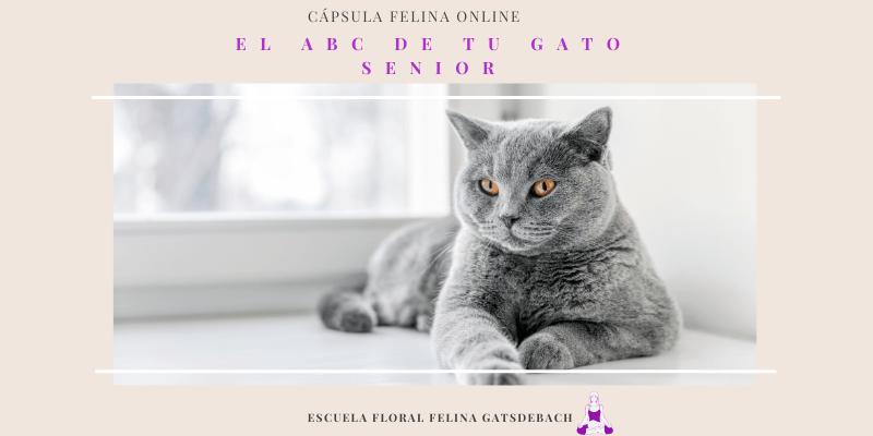 abc gato senior 800x400