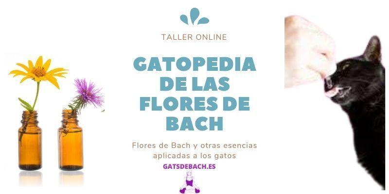 Taller online Gatopedia
