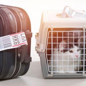 Gato viajando en avión