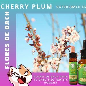 Cherry Plum