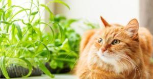 Refuerza las defensas de tu gato