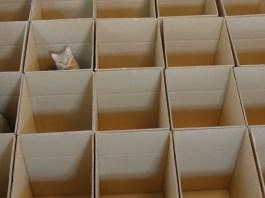 9 gatti giocano a nascondino