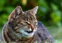 Gatto fa i capricci