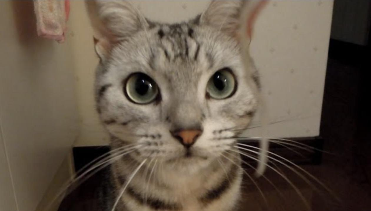 Gatto Arrabbiato Gattissimi
