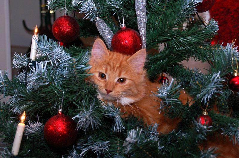 Gatti Sullalbero Di Natale Le Più Belle Immagini Gattissimi