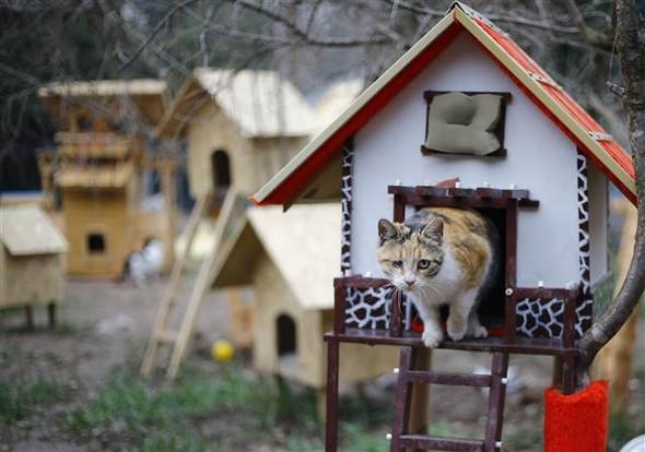 In Turchia Dei Volontari Realizzano Un Villaggio Per Gatti Randagi