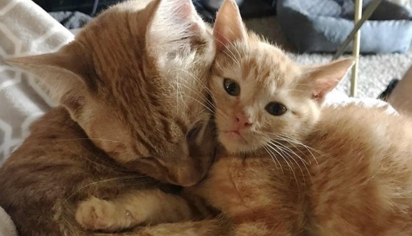 4 Gattini Hanno Bisogno Di Amore Un Gatto Maschio Diventa Il Loro