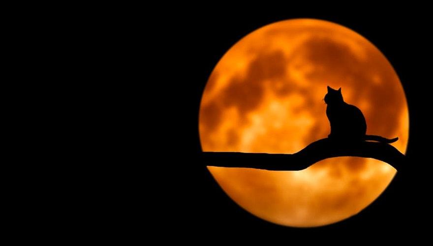 Gatto nero luna