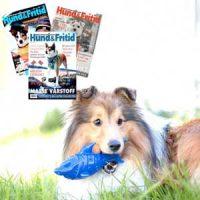 Hund&Fritid Abonnement + Avkjølende leke Image