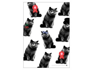 Plakat - Katt Image