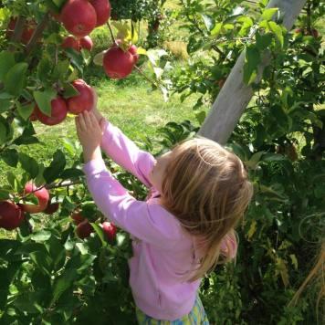 girl apples