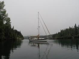 August 30 Gaviidae sitting quietly in Woodbine Harbour