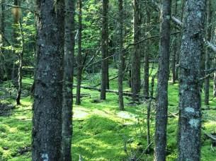 August 31 Moss heaven
