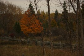 October 12 Typical fences on Manitoulin Island