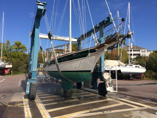 October 6 Gaviidae getting a bath in preparation for winter