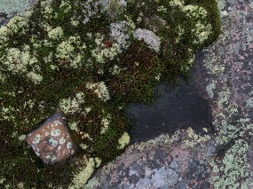 August 20 Moss colors on the rocks in Fox Harbour