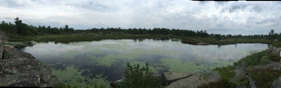 August 20 The bog in Fox Harbour