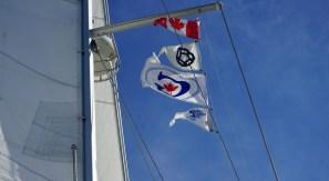 September 9 Gaviidae's flags